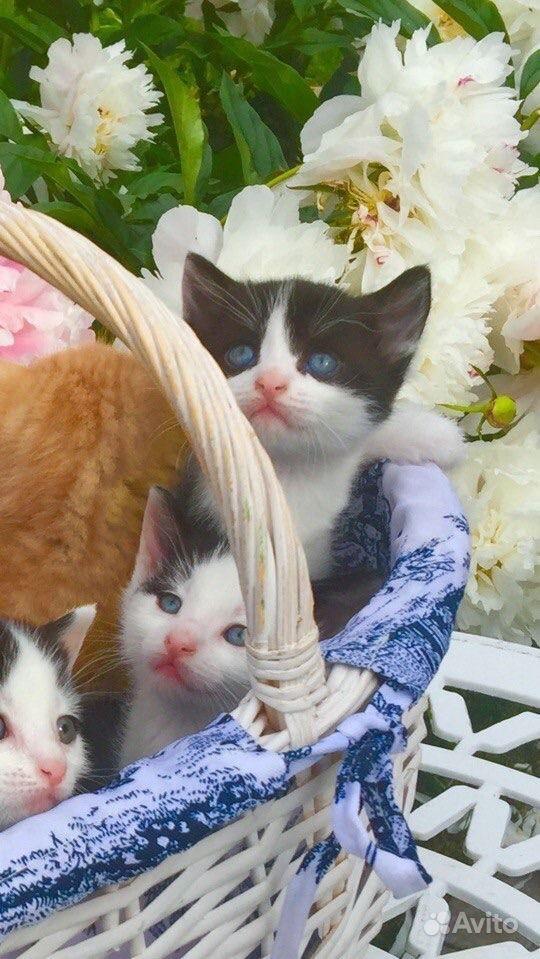Скачать котята в дар спб на авито