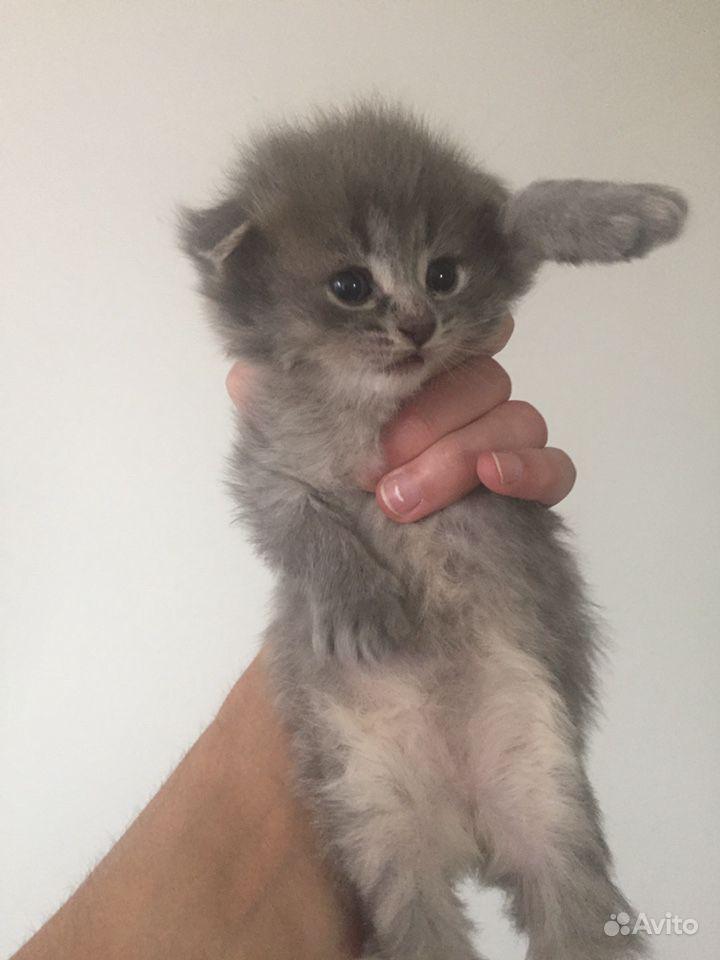Котята в Тамбове - фотография № 2