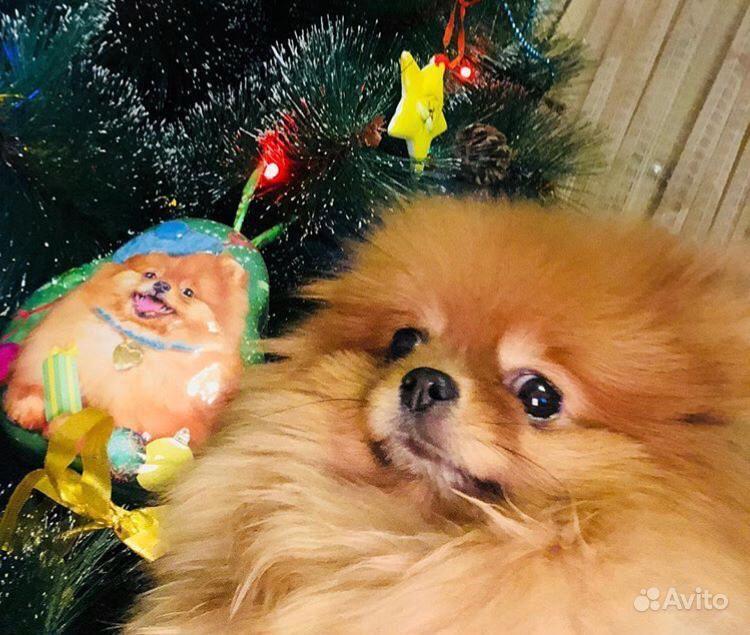 Собаки в Дзержинске - фотография № 1
