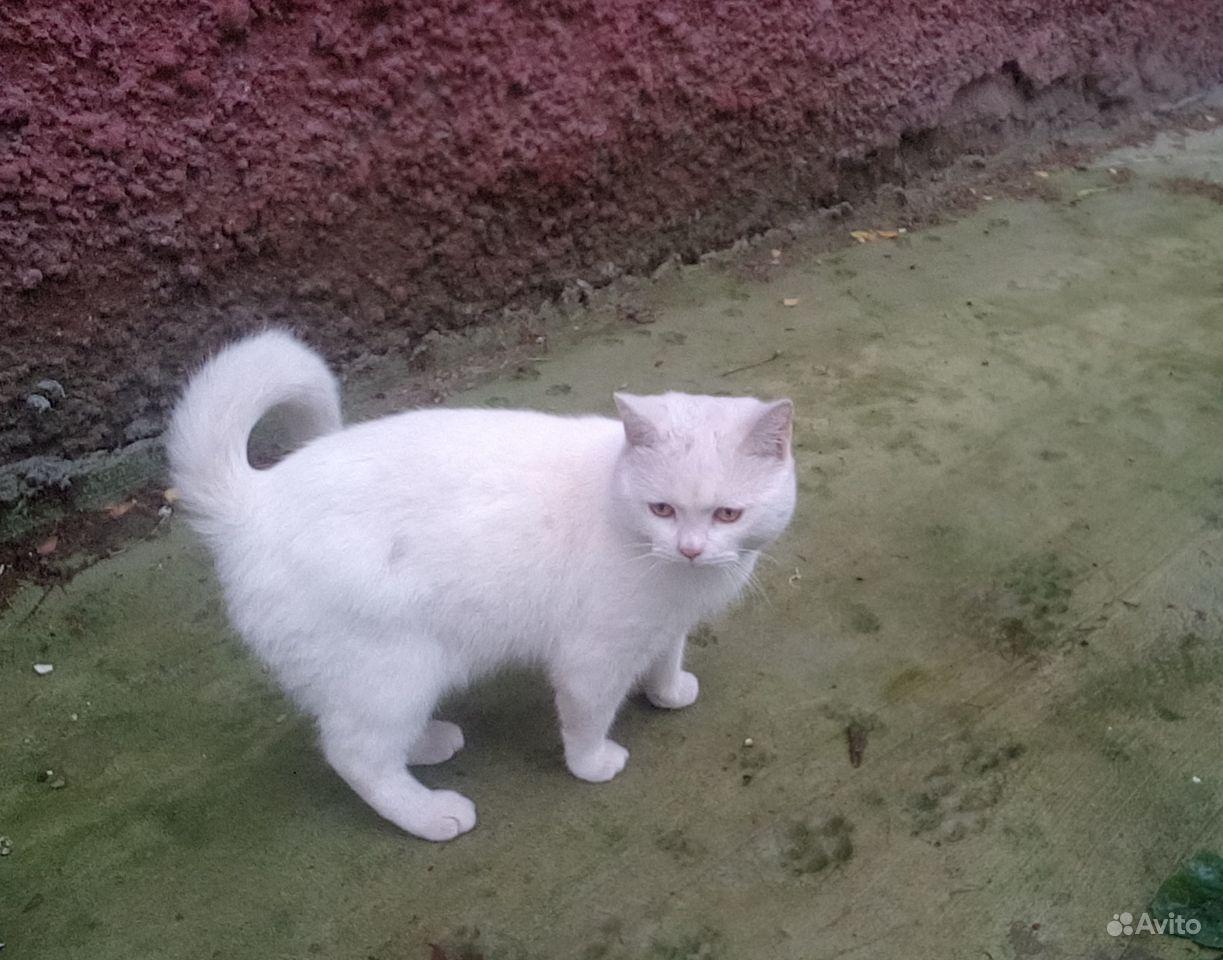 Найден кот в поселке Мичуринске