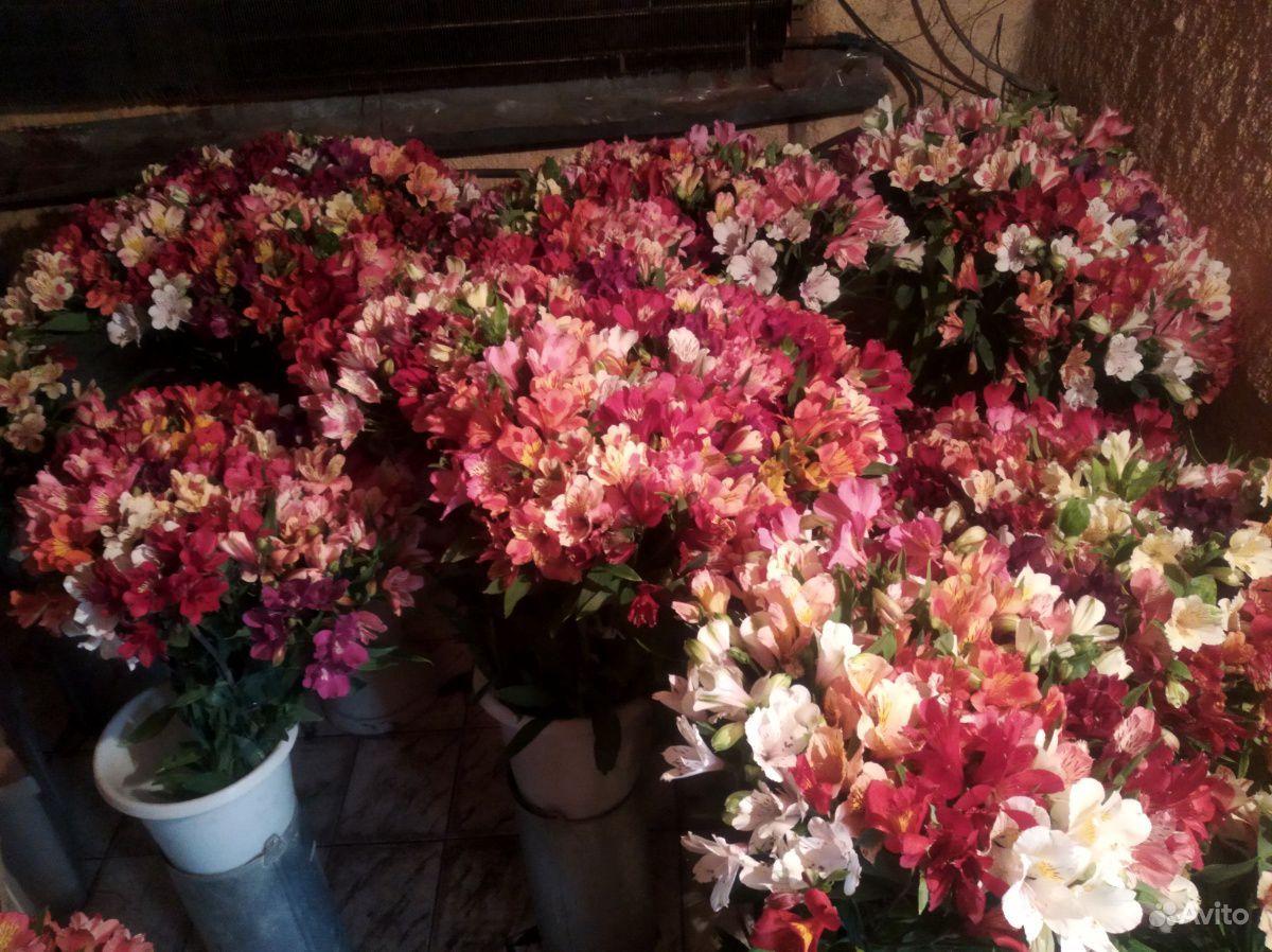 Цветы свежие альстромерия купить на Зозу.ру - фотография № 4