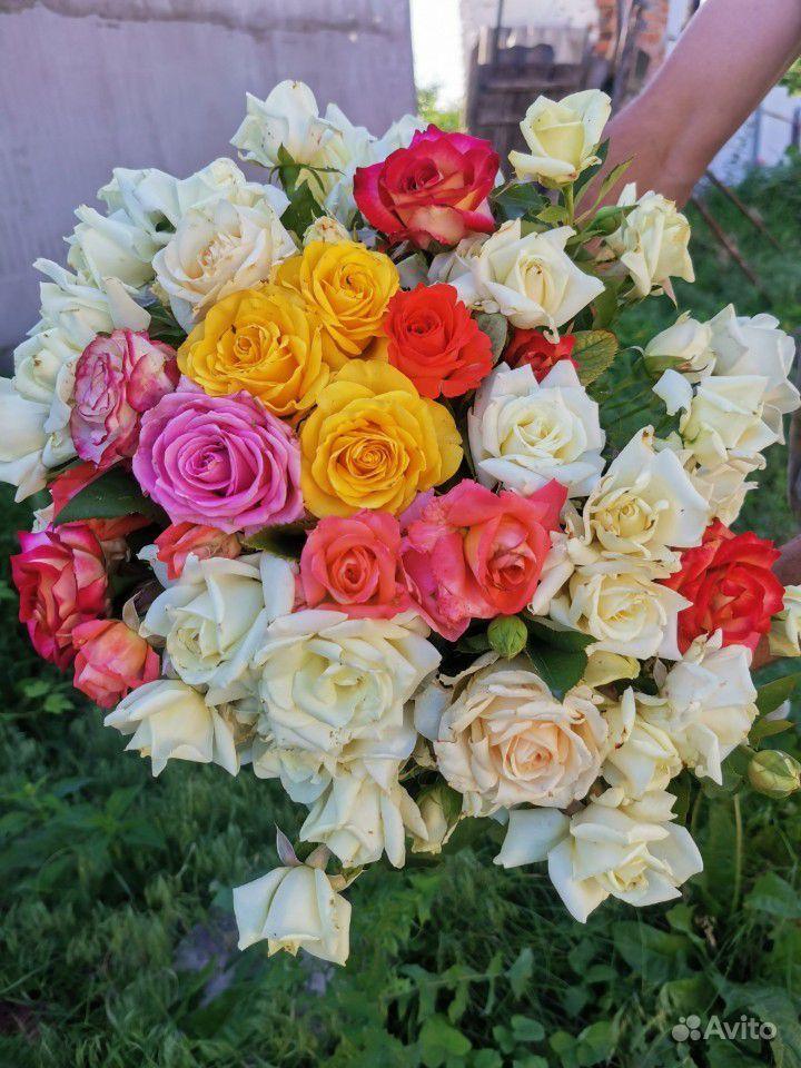 Розы на срезку. Букеты купить на Зозу.ру - фотография № 1