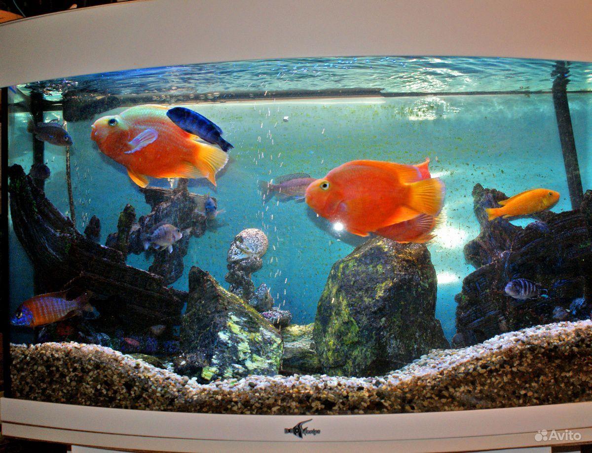 Дизайн аквариума купить на Зозу.ру - фотография № 6