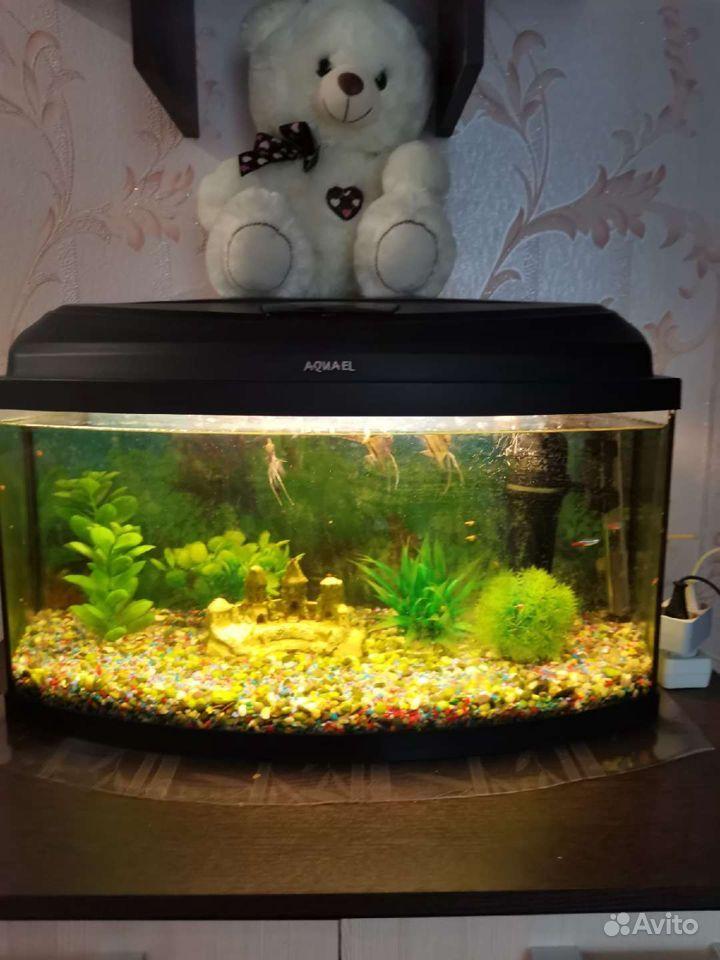 Продам аквариум купить на Зозу.ру - фотография № 1