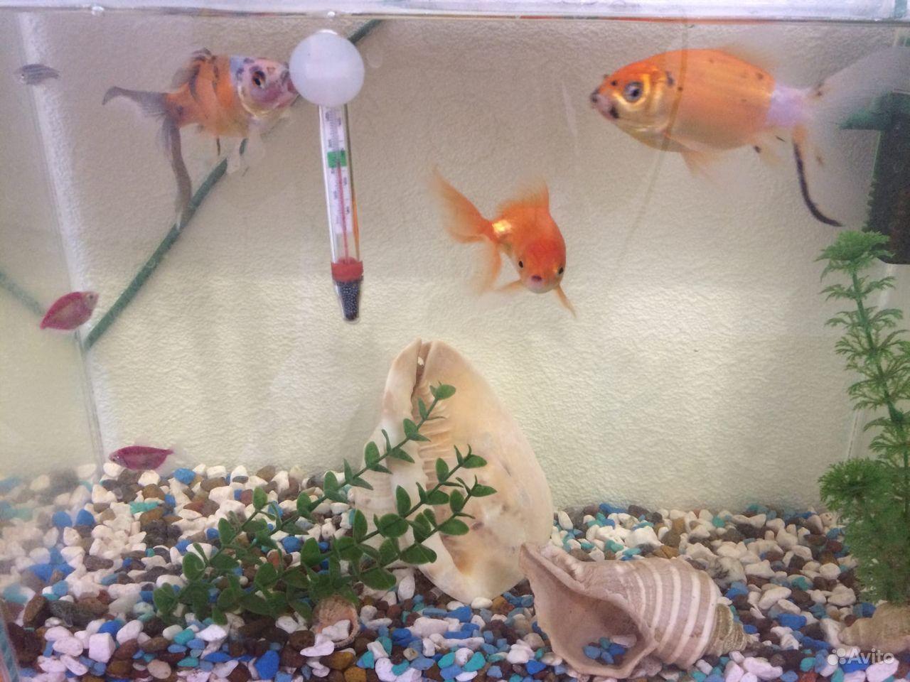 Аквариум с рыбками 30 литров купить на Зозу.ру - фотография № 1