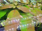Аквариумные растения (простые, редкие)