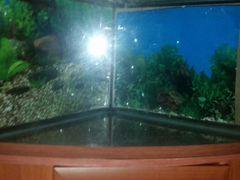Купить аквариум на авито в москве частные объявления подать бесплатное объявление в газеты через интернет