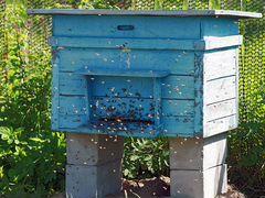 Продаются пчелы с ульями