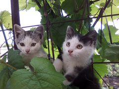 Котята ищут свой дом