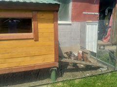Отряд из 8 цыплят