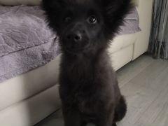 Собака щенок 4 месяца