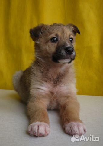 Объявление 2009 года отдам щенка за 3 тысячи петербург помогу взять кредит в красноярске частные объявления