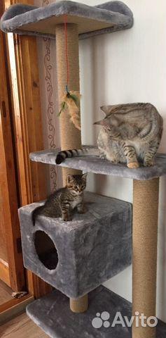 Домики для кошек от производителя купить 3