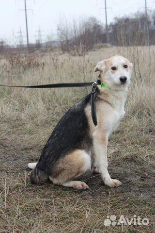 Собака щенок Эви в добрые руки бесплатно купить на Зозу.ру - фотография № 5