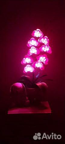 Lamp buy 2