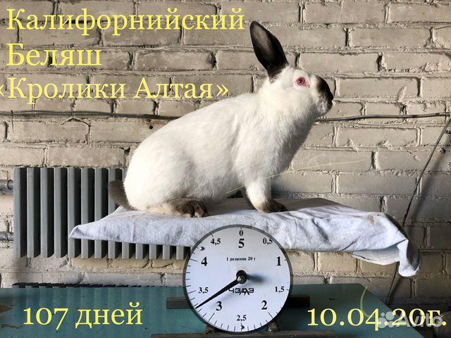 Кролики купить 9