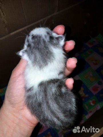 Kätzchen kaufen 1