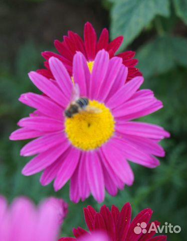 Цветы садовые купить 8