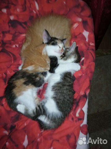 Кошка  89842869438 купить 1