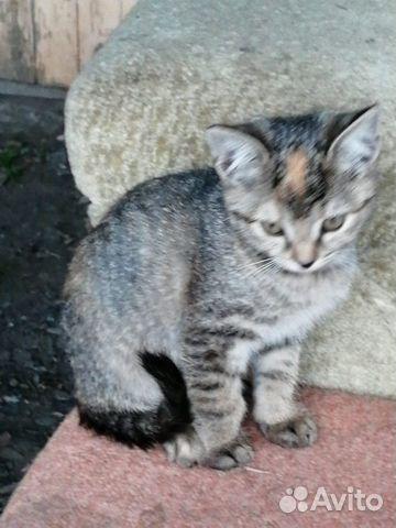 Кошка  89137398914 купить 6