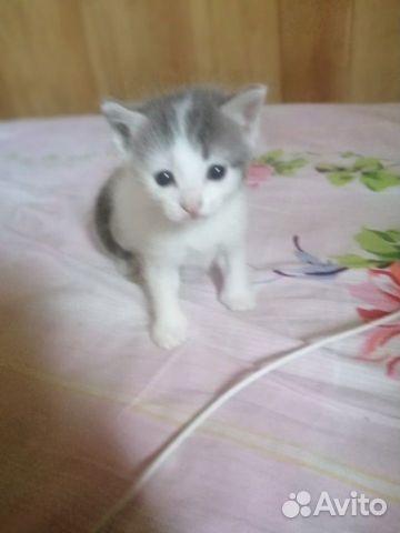 Кошка  89148760418 купить 7