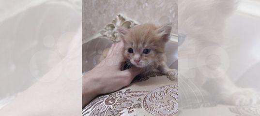 Котик купить в Нижегородской области | Животные и зоотовары | Авито