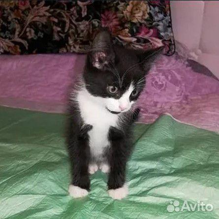 Котенок в хорошие и добрые руки  89163691460 купить 2