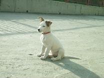 Продам щенка(девочка)