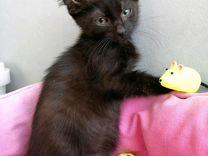 Чёрный красавец котенок в добрые руки