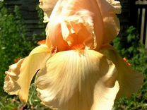 Цветы уличные — Растения в Рязани