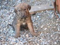 Милый щенок только в самые добрые руки