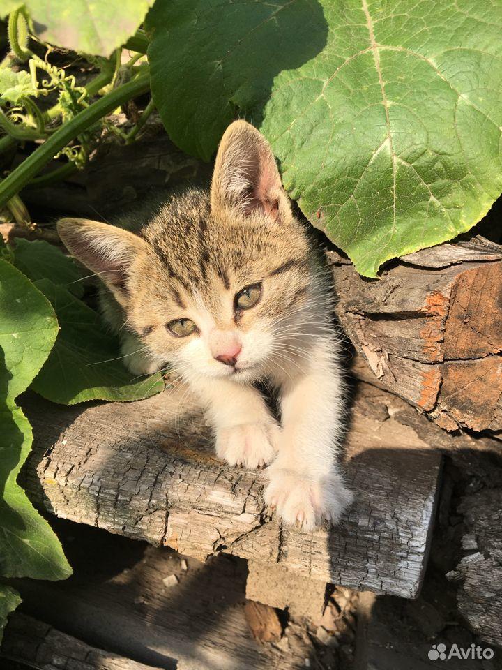 Отдам котят в добрые руки  89096353184 купить 9
