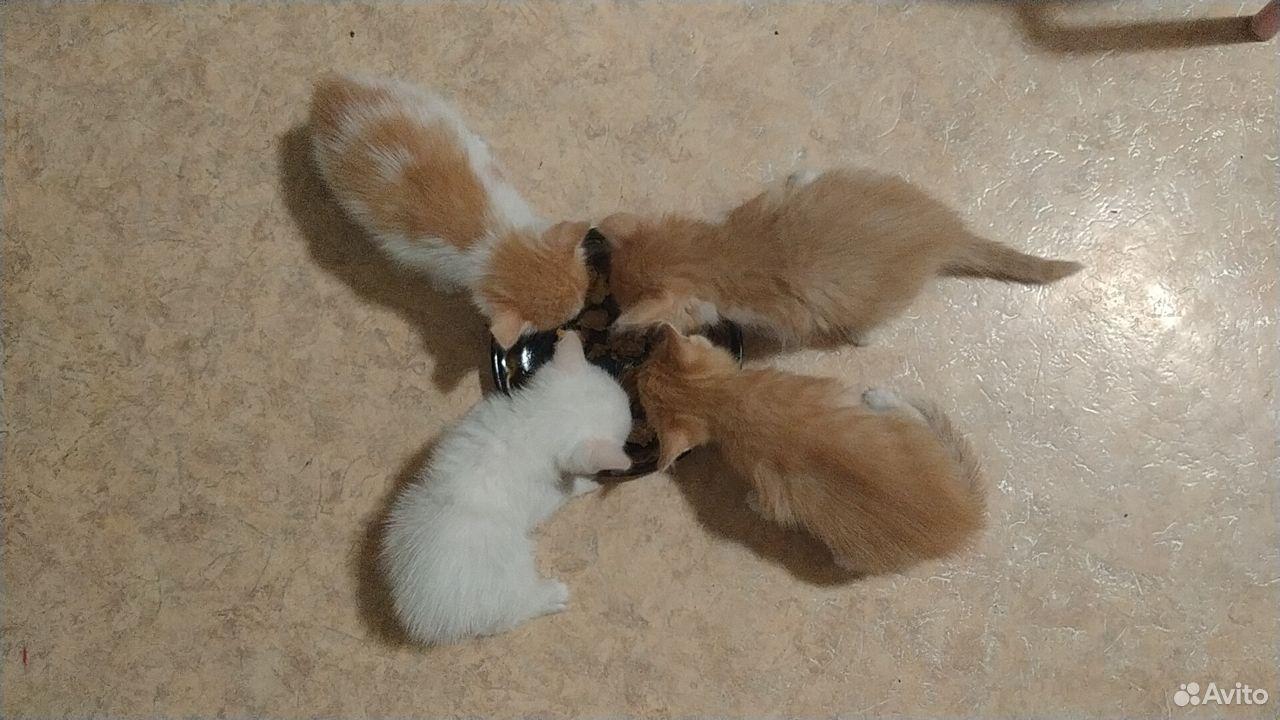 Отдам миленьких котят  89039946144 купить 10