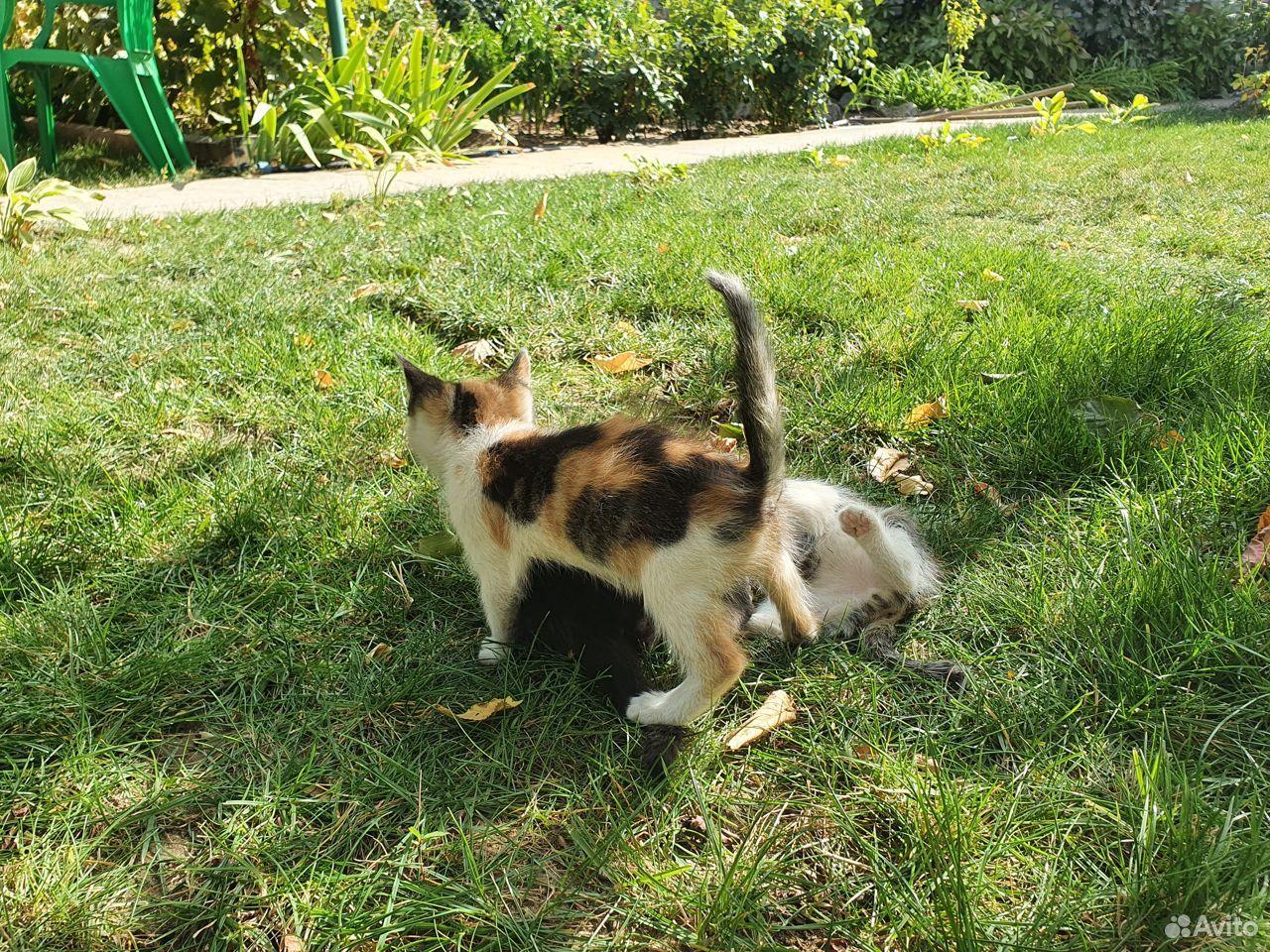 Кошка  89275330560 купить 2