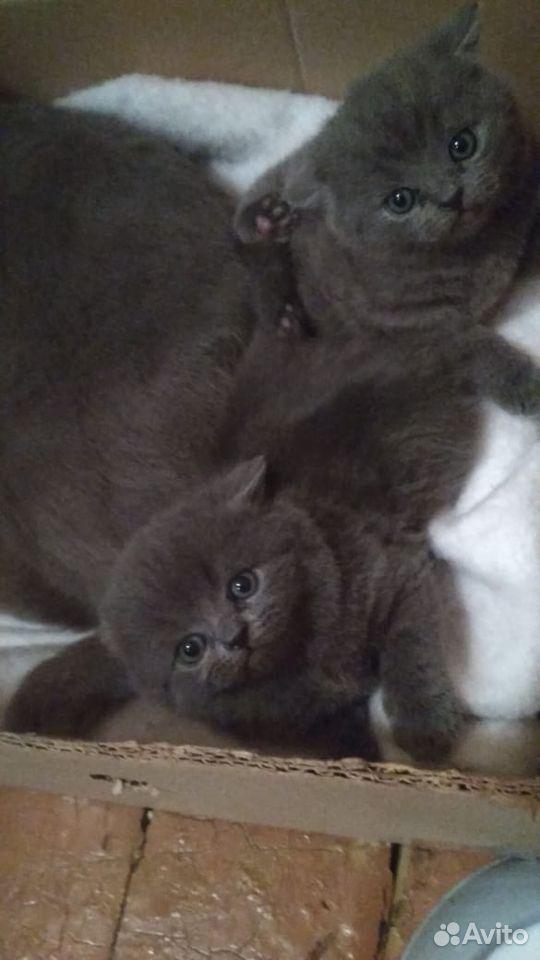 Кошки  89136104151 купить 1