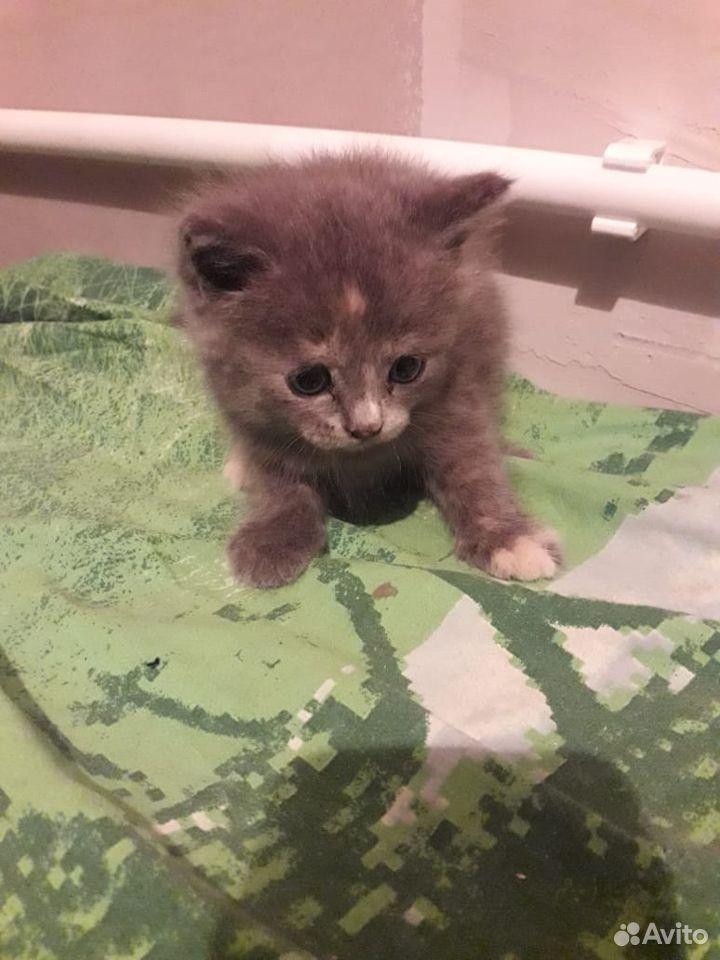Кошка  89231666554 купить 4