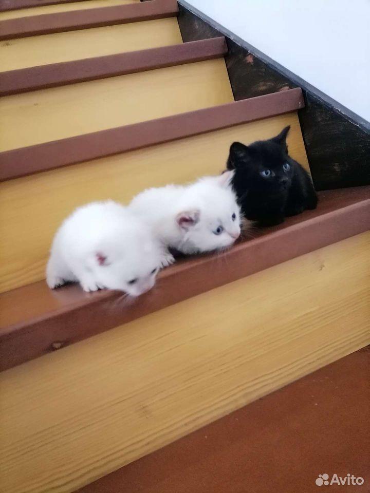 2 кошки и кот
