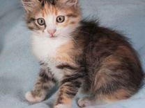 Котенок ждет Вас и Ваши добрые руки 3 месяца — Кошки в Геленджике